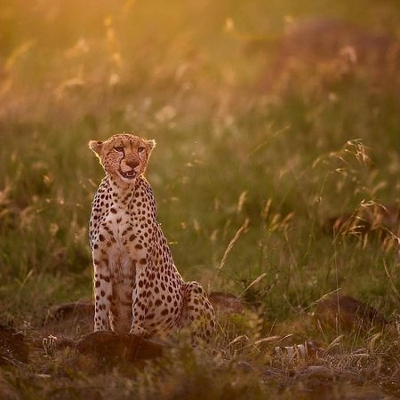 Serengeti National Park, Tanzanya: HFO Brothers have well placed itineraries through the year to follow the Great Serengeti migration with other amazing national parks