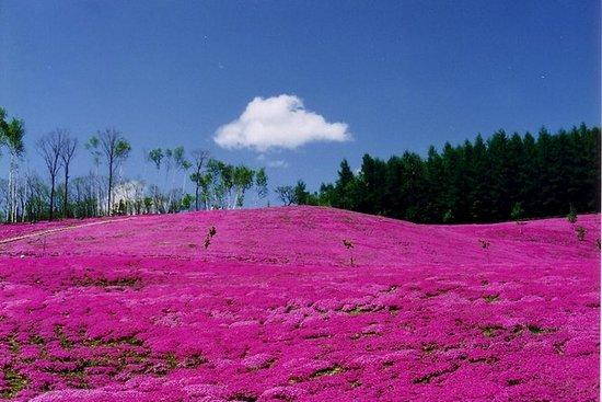Shibazakura Takinoue and Tulip Park...