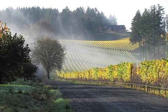 Visite de vignoble et dégustation en...