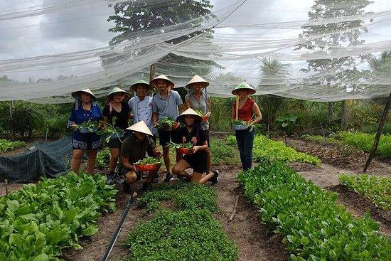 独特的农场到西贡的餐桌烹饪课