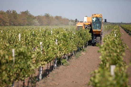 KVINT Winery Transdniestria