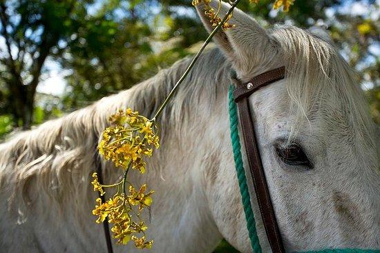 À cheval notre Hacienda - 4 heures de...