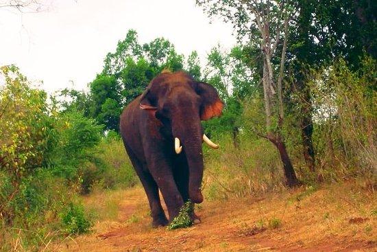 Tour de un día a Udawalawa Safari