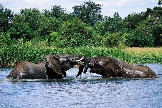 マーチソン滝への3日間の旅行ウガンダ