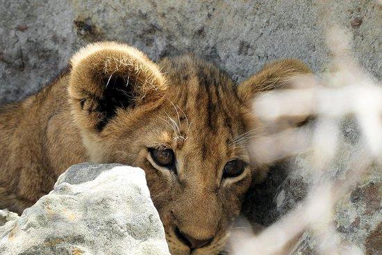 1 Day Kruger Guided Safari in an Open Safari Vehicle - Hoedspruit Departure
