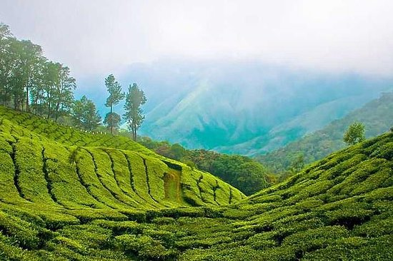 5 dager Kerala Private Tour Package