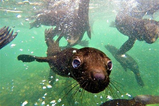 Zwem met zeehonden