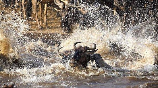 10天肯尼亚野生动物园和海滩度假(肯尼亚最好的酒店)