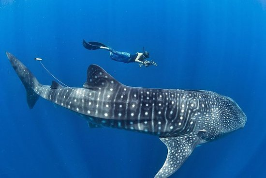 Whale Shark & Tumalog Falls...