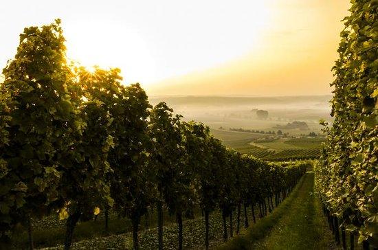 Private Half-Day Wine and Food in Chianti Classico from Florence: HALF DAY WINE AND FOOD TOUR IN CHIANTI CLASSICO
