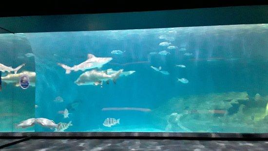 North Carolina Aquarium on Roanoke Island (Manteo) - 2020 ...