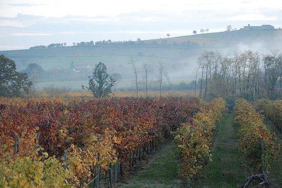 Desde Parma: tour privado de vinos...