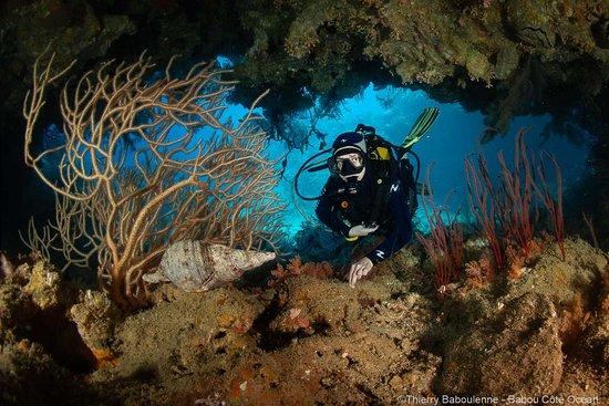 Hienghène, Nowa Kaledonia: Grotte, gorgones et toutoute (Charonia tritonis)