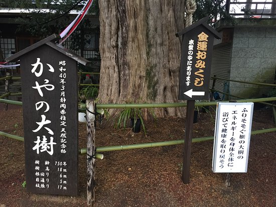 Higashiizu-cho, Japan: パワーを感じました