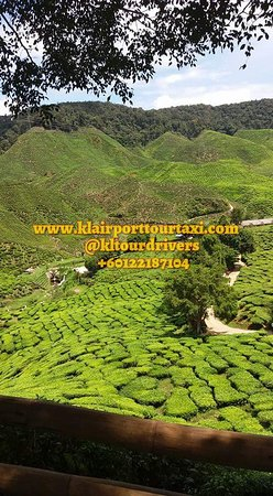 Day tour to Cameron Highlands. Around for hours from Kuala Lumpur by car.  The weather there is very cool. We are visiting Lata Iskandar Waterfall,  Tea Farm,  Bee Farm,  Strawberry Farm,  Lavender Farm and other.  We can pick a fresh strawberry. Can buy fresh vegetable also. You can enjoy the fresh nature there.  Any enquiry please call or whatsapp at wasap.my/+60122187104  Thank you and regards.