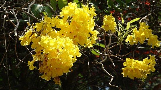 "Royal Botanical Gardens: по моему так цветёт ""пушечное ядро"""
