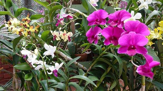 Royal Botanical Gardens: павильон орхидей