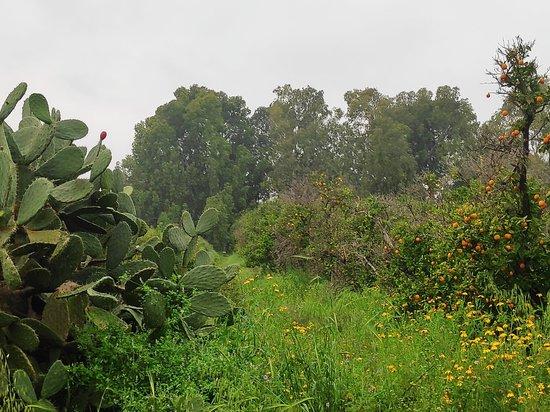 Ness Ziona, Izrael: גן לאומי גבעות הכורכר צד מערב