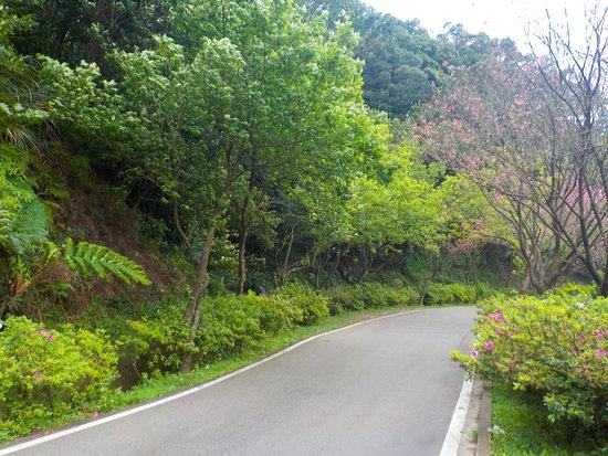 San Zhi Cherry Road