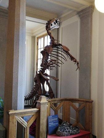 Evolutionsmuseet