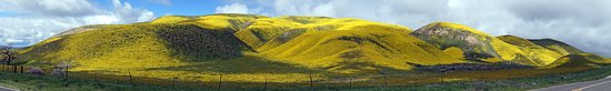"""Maricopa, كاليفورنيا: north hill side on CA state highway 58 .... West of route 58 and """"7 mile Road """". """