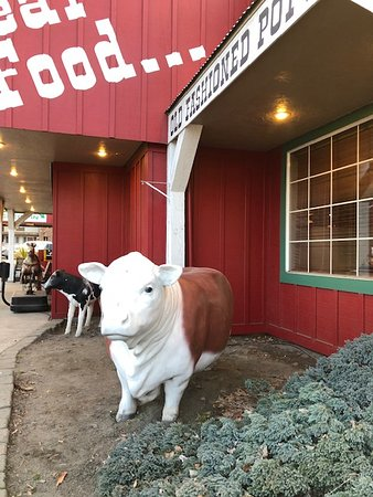 Livestock out front