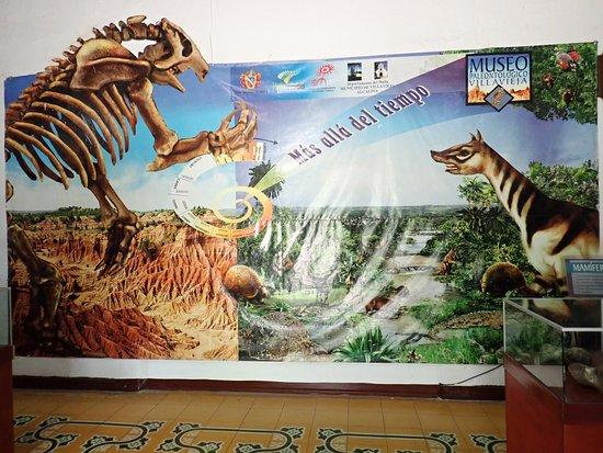 Museo Paleontologico