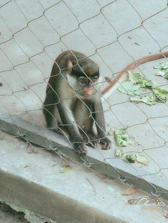 Kinshasha zoo