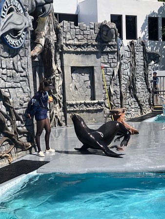 Chankanaab Adventure Park Day Pass + Lunch!: The seal show was packed with visitors