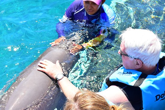 Chankanaab Adventure Park Day Pass + Lunch!: We got to pet the silky, wet rubbery skin of the dolphin