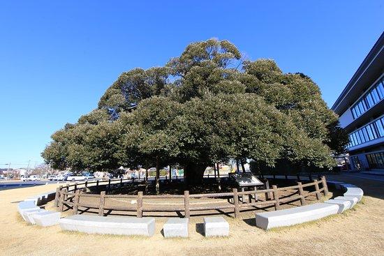 Sudagi Park