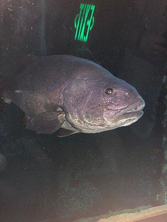 Aquarium of the Bay Resmi