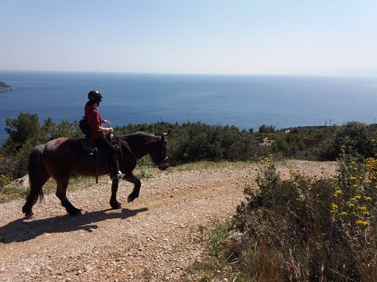 Spetses, Greece: The view from our way back to the stables
