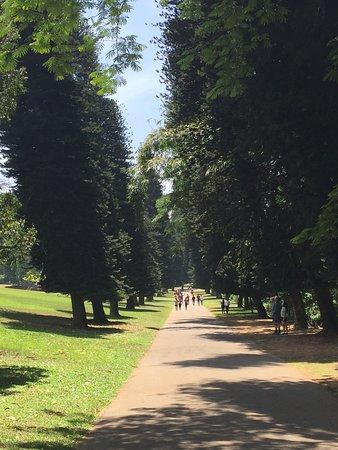 Royal Botanical Gardens: Botanical garden path