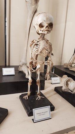 scheletro di feto