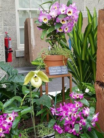 Orchid show--FANTASTIC