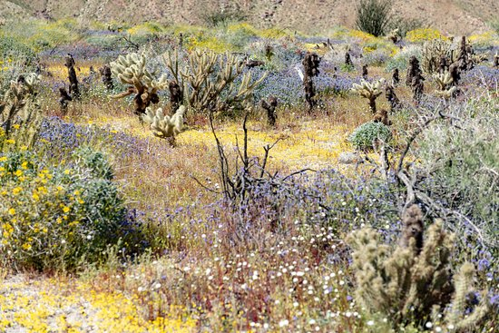 Borrego Springs, Kalifornien: Incredible desert blooms along the Hellhole Canyon Trail