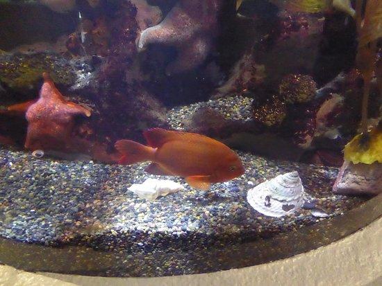 Aquarium of the Bay: Goldfish