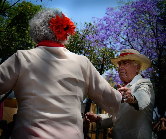 Mexico City Photo Tours: This couple at the danson in the park really caught my attention. It's amazing to see the love those older couples had for each other.  It was tough in this setting capturing images without too much commotion in the background but I like how the one came out--I also love those beautiful purple trees all over Mexico City.
