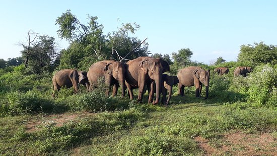 Udawalawe Safari Jeep Tours
