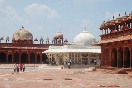Taj Trips