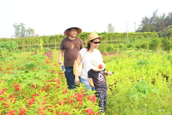 Visiting and making tranditional cany at An Farm Hoi An