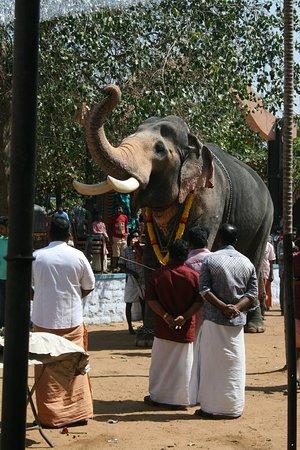 Temple festival - the elephant salutes the gods