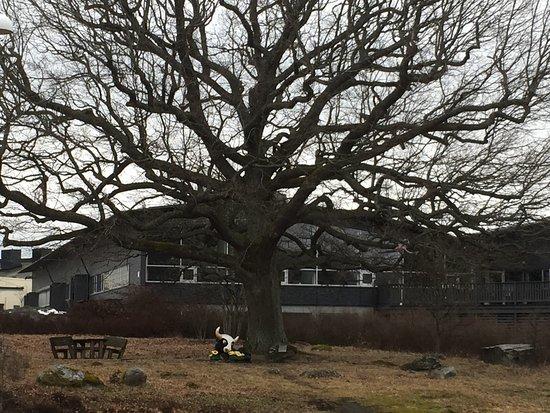 Arlandastad, สวีเดน: Ferdinand under korkeken