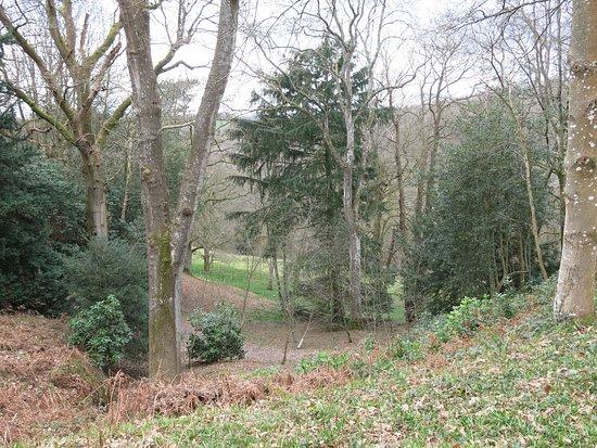 Wakehurst: In Bethlehem Wood.