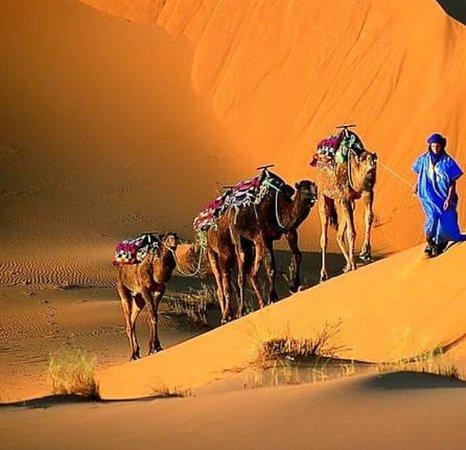 Morocco Desert Camel