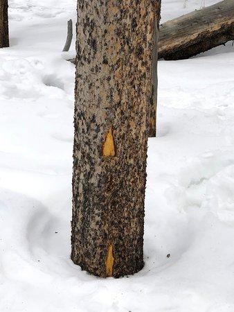 Rocky Mountain National Park and Estes Park Tour from Denver: Telltale signs of a porcupine