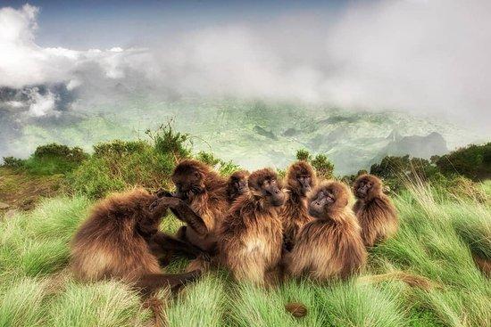 Simien Mountain Trekking and Tours: www.trekkingsimienmountain.com