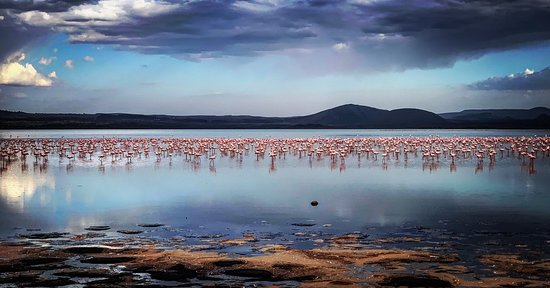 Flamboyance of Flamingos !!!