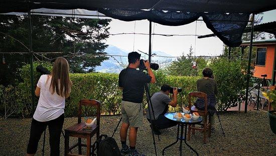 Birding & Hummingbirds Photographers at Quinta GALEON Lodge